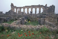 Red Poppies near Basilica in Ancient Roman City, Morocco Fine Art Print