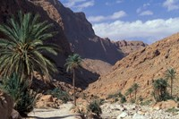 Palm Trees and Creekbed Below Limestone Cliffs, Morocco Fine Art Print