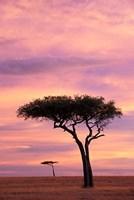 Pair of Accasia Trees at dawn, Masai Mara, Kenya by Adam Jones - various sizes, FulcrumGallery.com brand