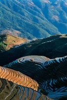 Mountainside Rice Terraces, China Fine Art Print