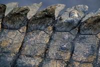 Nile Crocodile, Masai Mara Game Reserve, Kenya by Paul Souders - various sizes - $43.49