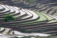 Rice terraces, Yuanyang, Yunnan Province, China. by Jaynes Gallery - various sizes, FulcrumGallery.com brand