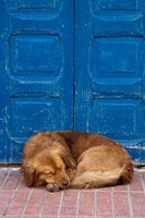 Sleeping Dog, Essaouira, Morocco Fine Art Print