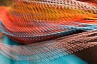 Samburu Dancer's Colorful Necklace, Samburu National Reserve, Kenya by Jaynes Gallery - various sizes