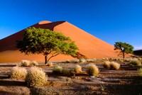 Trees with Sossosvlei Dunes, Namib-Naukluff Park, Namibia Fine Art Print