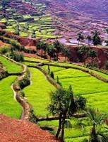 Rice Terraces, Jiayin Village, Honghe, Yunnan, China by Charles Crust - various sizes