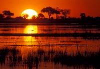 Setting Sun over Lush Banks, Chobe National Park, Botswana Fine Art Print