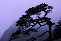 Seeing Off Pine Tree on Mt Huangshan (Yellow Mountain), China Fine Art Print