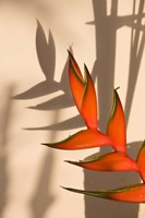 Seychelles, Mahe, Anse Royale, Heliconia flowers by Walter Bibikow - various sizes