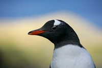 South Georgia Island, Stromess Bay, Gentoo penguin by Jaynes Gallery - various sizes, FulcrumGallery.com brand