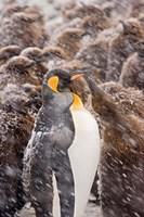 South Georgia, Salisbury Plain, King penguin by Jaynes Gallery - various sizes, FulcrumGallery.com brand