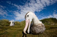 Close up of Albatross by Paul Souders - various sizes