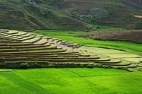 Spectacular green rice field in rainy season, Ambalavao, Madagascar Fine Art Print
