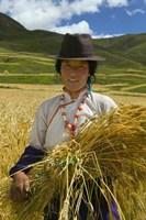 Tibetan Farmer Harvesting Barley, East Himalayas, Tibet, China by Keren Su - various sizes - $40.49