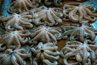 Tanzania, Zanzibar, StoneTown, Darajani Market, Octopus Fine Art Print