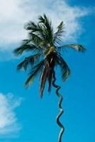 Tanzania: Zanzibar, curly-que trunk of palm tree inland Fine Art Print