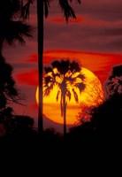 Sunset and Palm, Ngamiland, Okavango Delta, Botswana by Art Wolfe - various sizes