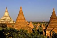 Temples of Bagan Surrounded by Trees, Bagan, Myanmar Fine Art Print