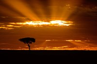 Sunrise, Maasai Mara, Kenya Fine Art Print