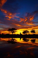 Sunrise, Okaukuejo Rest Camp, Etosha National Park, Namibia Fine Art Print