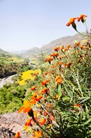 Tagetes plants and landscape, Ethiopia by Martin Zwick - various sizes