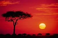 Wildebeest Migration, Masai Mara, Kenya by Dee Ann Pederson - various sizes