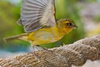 Wild Bird on Fregate Island, Seychelles, Africa by Alison Wright - various sizes