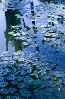 Villa Pond, Jardin Majorelle and Museum of Islamic Art, Marrakech, Morocco by Walter Bibikow - various sizes