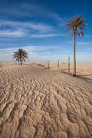 Great Dune and Palm Trees, Tunisia Fine Art Print