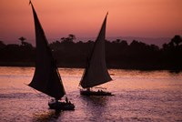 Traditional Feluccas Set Sail on the Nile River, Egypt Fine Art Print