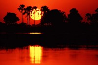 Tropical Sunset in North Central Botswana Fine Art Print