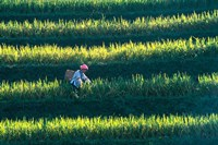 Zhuang Girl in the Rice Terrace, China by Keren Su - various sizes