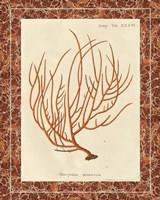 Gorgonia Miniacea Marble by Wild Apple Portfolio - various sizes