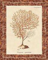 Gorgonia Granulata Marble by Wild Apple Portfolio - various sizes