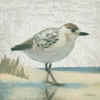 Beach Bird I by James Wiens - various sizes