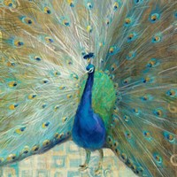 """20"""" x 20"""" Peacock Pictures"""