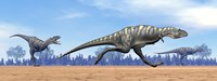 Three Aucasaurus dinosaurs running in the desert Fine Art Print