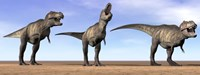 Three Tyrannosaurus Rex dinosaurs standing in the desert Fine Art Print