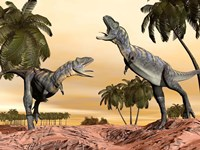 Two Aucasaurus dinosaurs fighting in desert by Elena Duvernay - various sizes