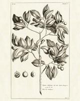 Tropical Leaf Study II by Wild Apple Portfolio - various sizes