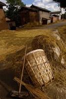 Bai Minority Laying Wheat on the Road, Jianchuan County, Yunnan Province, China Fine Art Print