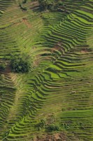 Rice Terraces of the Ailao Mountains, China by Pete Oxford - various sizes