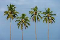 Coconut trees in Backwaters, Kerala, India Fine Art Print