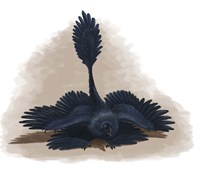 Microraptor gui spreads its four wings to look as large as possible by Emily Willoughby - various sizes