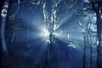 Misty rays in a dark forest, Liselund Slotspark, Denmark Fine Art Print