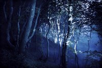 Dark forest, Liselund Slotspark, Denmark Fine Art Print