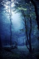 Misty, dark forest, Liselund Slotspark, Denmark Fine Art Print