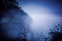 Silhouettes of trees and branches in a dark, misty forest, Denmark Fine Art Print