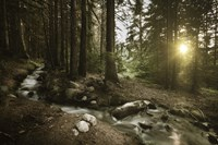 Small stream in a forest at sunset, Pirin National Park, Bulgaria Fine Art Print