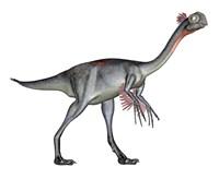 Gigantoraptor dinosaur, white background Fine Art Print